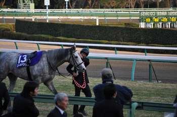 2012有馬記念優勝馬.JPG